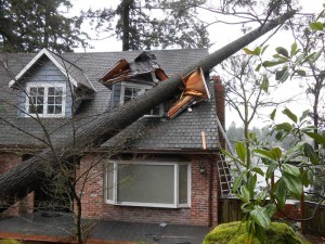 Home Insurance 101- What Happens if my Neighbor's Tree Falls on my Yard?