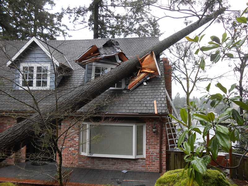 Home Insurance 101 What Happens If My Neighbor S Tree